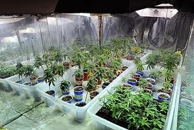 Commercial loan on a marijuana farm