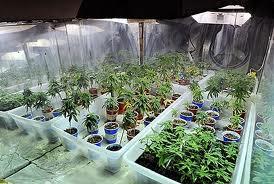 Commercial loan on a marijuana farm
