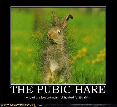 Pubic_Hare