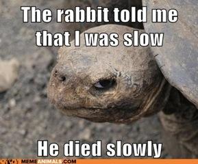 Tortoise Died