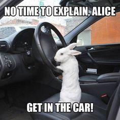 Alice-2