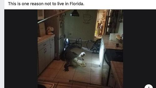 Alligator in kitchen
