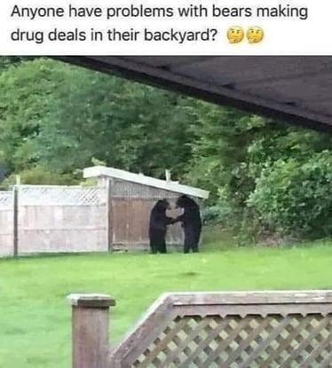 Bear Drug Deals