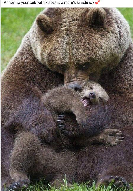 Bear Kisses