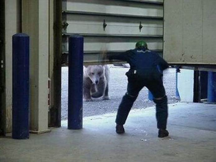 Bear and garage-1