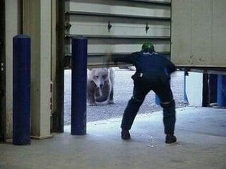 Bear and garage.jpg