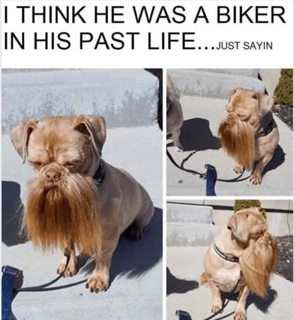Biker Dog