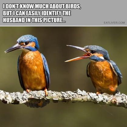 Bird Husband