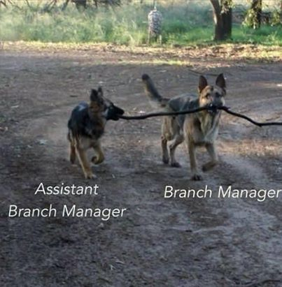 Branch Manager.jpg