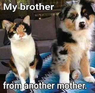 Brother-1.jpg