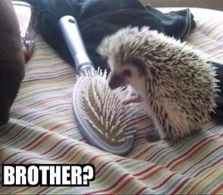 Brother.jpg