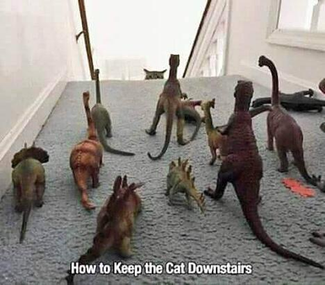 Cat Downstairs