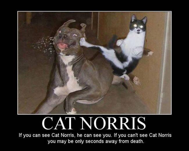 Cat Norris.jpg