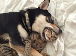 Cat Spooning.jpg