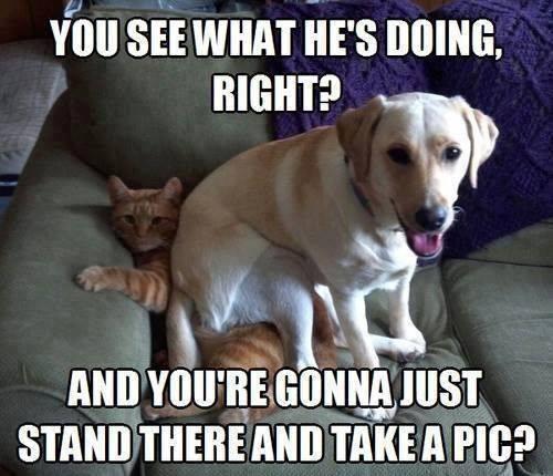Cat Squish