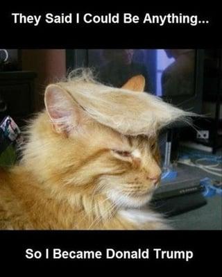 Cat Trump.jpg