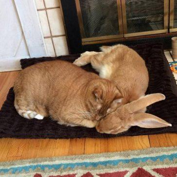 Cat and Rabbit.jpg