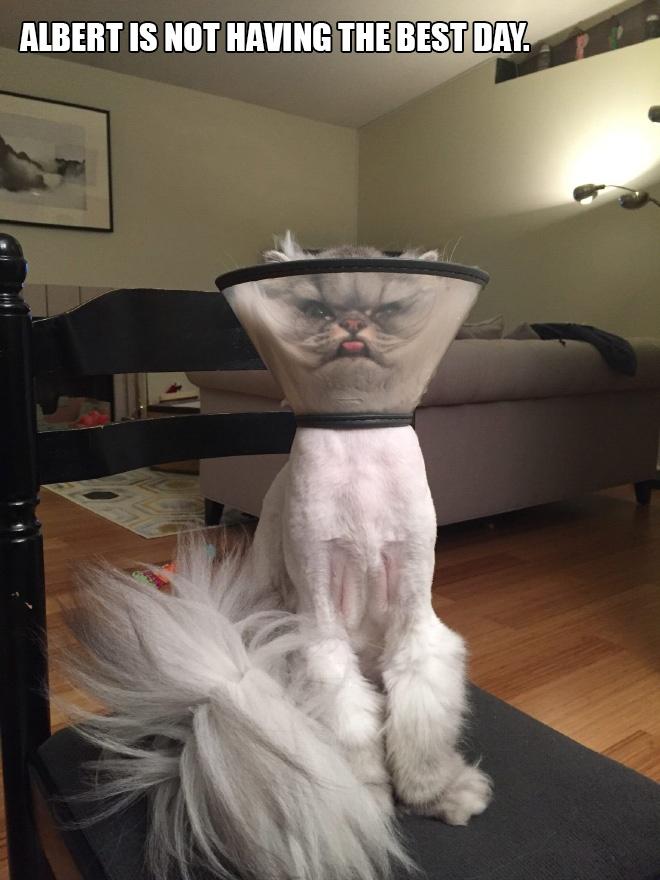 Cat cone