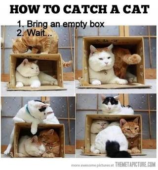 Catch a Cat.jpg