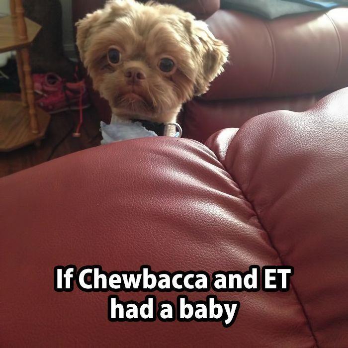 Chewbacca.jpg