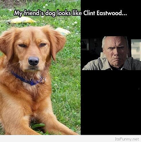 Clint-Eastwood-Dog