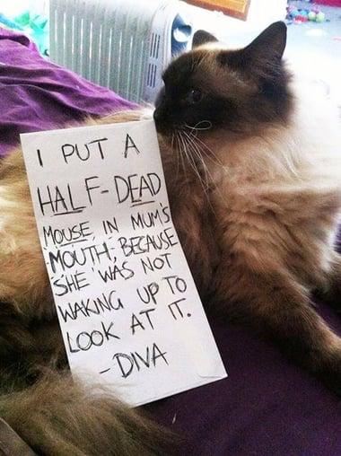 Dead Mouse Pic