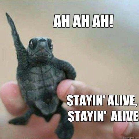 Disco Turtle
