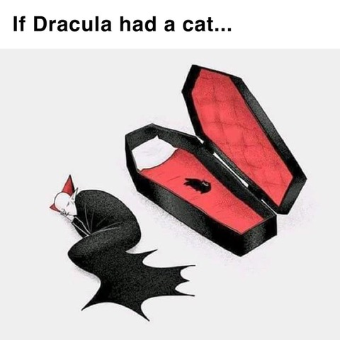 Draculas Cat
