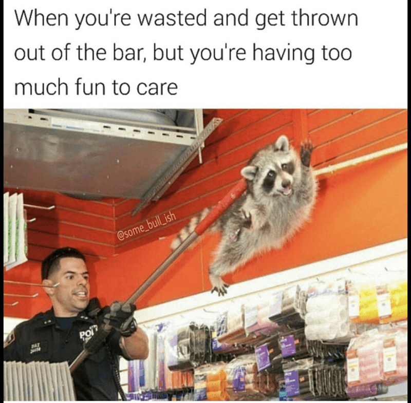 Drunk Raccoon