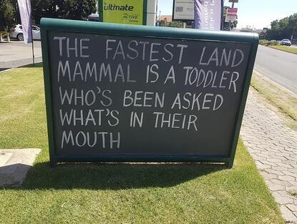 Fastest Land Animal