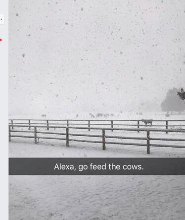 Feed the cows