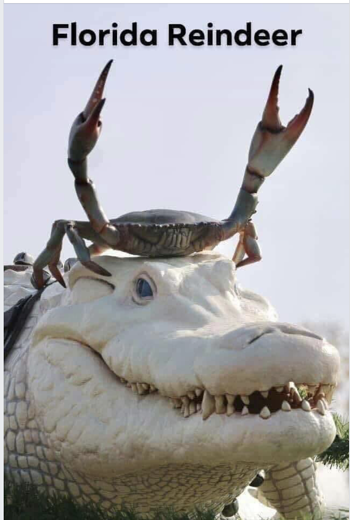 Florida Reindeer