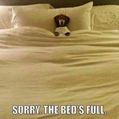 Full Bed.jpg