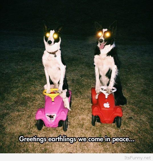 Funny-alien-dogs