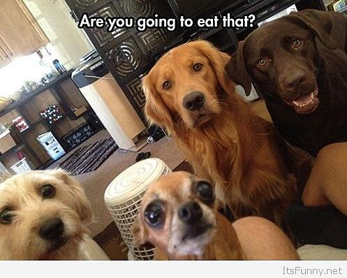 Funny-hungry-dogs