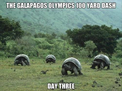 Galapagos-1
