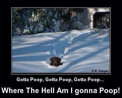 Gotta Poop-1