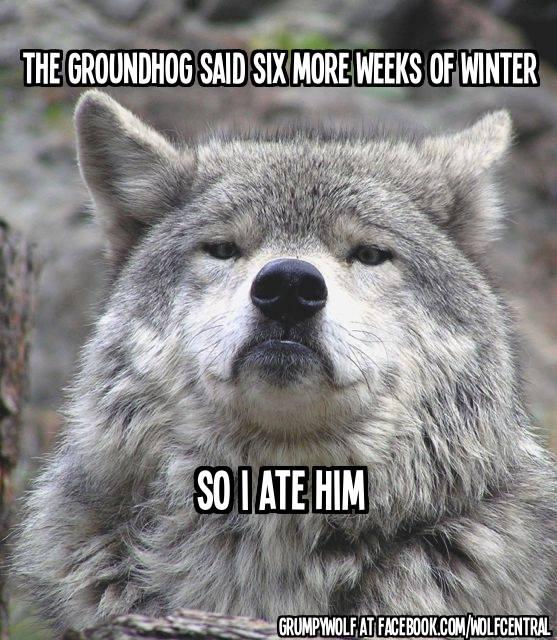 Grmpy Wolf