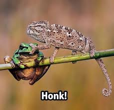 Honk-1