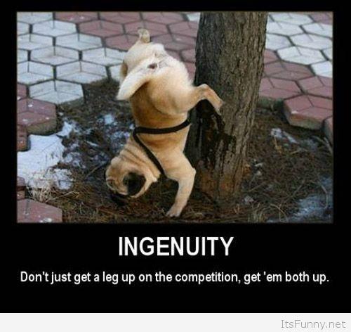 Ingenuity-funny-dog