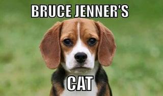 Jenner's Cat.jpg