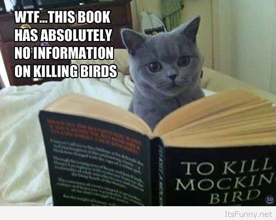 Kill a Mocking Bird