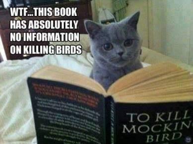 Kill a bird