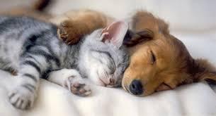 Kitten-Puppy Spooning.jpg