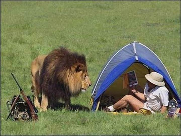 Lion and tent.jpg