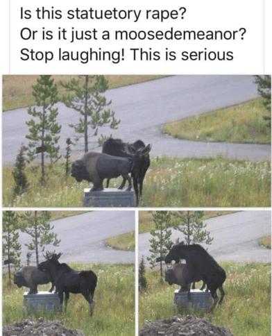 Moose Humping