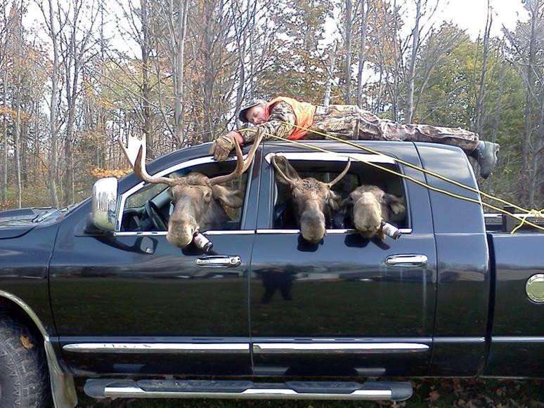 Moose_Hunting.jpg