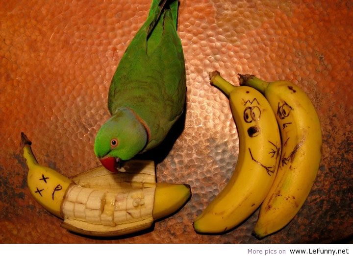 Parrot-and-banana-funny