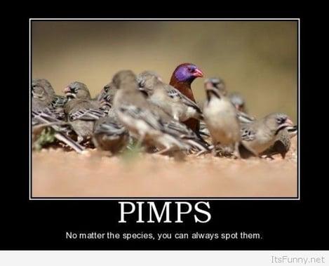 Pimps-1