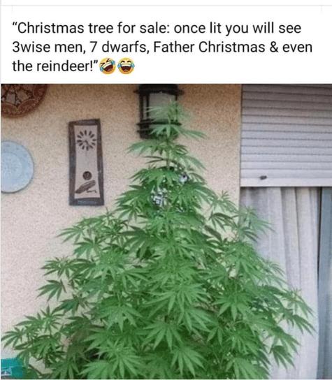 Pot Tree-1